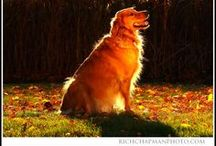 Goldens Rule!!!! / by Penny Chapman