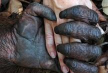 """☜♥☞  Animals Friends ☜♥☞ / Quando non sei tu la vittima, diventa molto facile giustificare crudeltà, ingiustizia, disuguaglianza, schiavismo, assassinio. Questo stiamo facendo subire agli animali. [Gary Yourofsky] / by """"Basilico & Patchouli"""""""