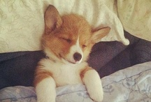 It's sooo fluffy!!! / by Kacie Cardenas