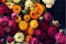 flowers / by Luda Tkachuk