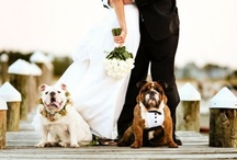 Woof in Wedding / by Carats & Cake