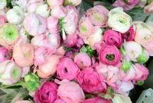 florals. / by Candace Pistolis