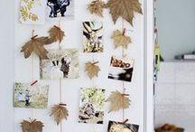 Fall  / by Krista Adams