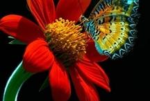 Butterfly Kisses / by Melody Zuker