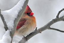 Birds / by Marisol Ortiz