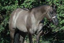 horses / by Stephanie Richoll