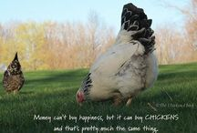 Crazy Chicken Lady / by Janet Reneau