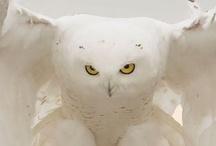 owls / by Beatriz-Bety Kelley