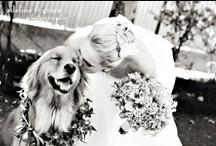 Wedding / Anniversary Ideas / by Jenny Raymond