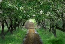 Garden ~ Trees / All about trees.... beautiful, lovely trees! / by Organic Gardens Network™