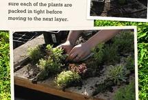 Gardening / by Michelle Benedict