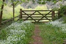 Fences Pathways and Roads / by Darlene Myers