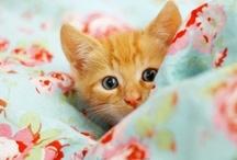 Here Kitty Kitty / by Suhaiylah Abdul-Hakim