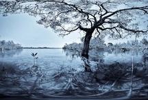 The Tatai River / by Paul Stewart