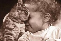 Animals and People Made Cuter by a Cat / by Tracy Avallone