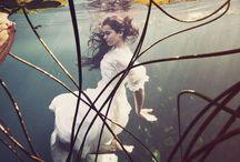 Fairies / by Daniela Matchael