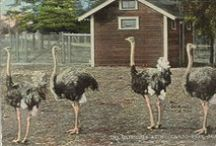 Woodland Park Zoo / by Seattle Municipal Archives