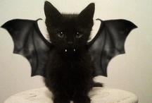 Halloween  / by Kathy Conrad