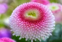 Flowers / by Susanne Fountain
