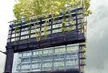 urban farming + gardening / it's what i do / by Fran DePalma