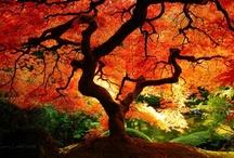 Beautiful Nature / by Matt Crawford