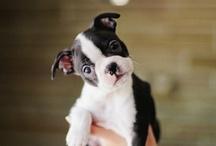 pets / by Joanna Ballentine
