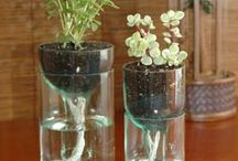 For the Green Thumb (I don't have) / by Tambi Clardy