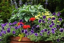 Outdoor and Garden Ideas / by Beverly Rowell