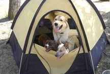 Camping / by Michelle Hulse