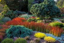 My Garden / by Jody Johnston