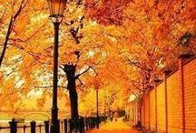 Fall, my friend... / by Hailey Reedy