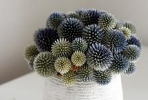 floral / by Melissa Guedes - vintage + little