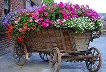 Gardening / by Linda Durkop Bonney
