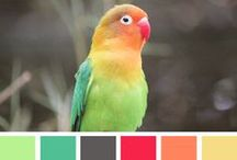Colors / color guide / by Nicole Freeman
