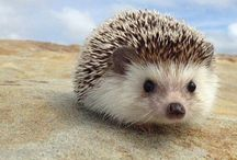 Cutie Pies / Precious pictures of animals, large and small  / by Alexandra Butterworth