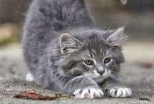 "PURRRfeCT!!! / I luv beautiful kitties!!! / by Rachael Powell - ""MyssP"""