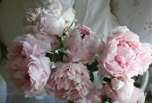 "Roses - Old English / by Rachael Powell - ""MyssP"""
