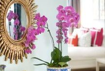 Color of the Year: Radiant Orchid / by bareMinerals