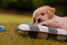 cutie pets :) / by Ashley Murray