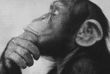 monkey love / by Dawn Acuna
