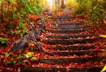 Fall inspiration  / by Azure Elizabeth