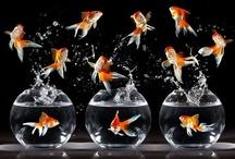 AQUARIUMS / Fish bowls, aquariums, designs of aquariums, designs for homes / by Lorie Mailhot