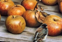 for the love of apples / by Constanza Lara Autonell