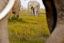 If I could, I'll marry an elephant. <3 / by Ale Leiva
