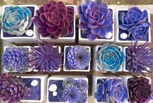 Succulents / by Kate Wall