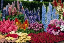 Flowers & Gardens! / by Live Alive
