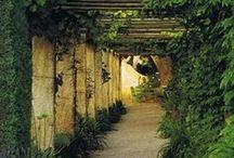 Dream Garden / by Amanda Kirkwood