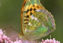 Butterflies and other Bugs / by Donna Curtis