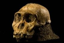 Paleoanthropology / by The Leakey Foundation