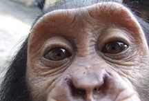 Primates / by The Leakey Foundation